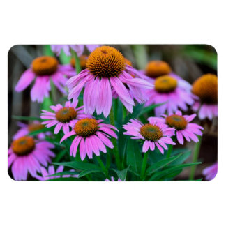 Coneflowers Magnets