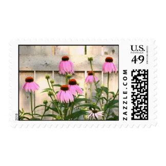 Coneflowers Postage Stamp