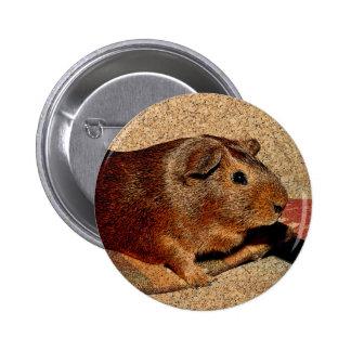 Conejillo de Indias de la mirada de Corkboard Pin Redondo 5 Cm