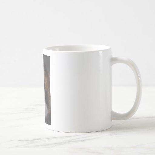 Conejillo de Indias de Texel Tazas De Café