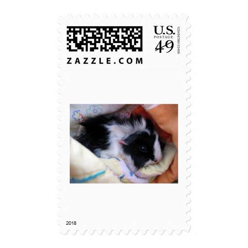 conejillo de Indias Timbre Postal
