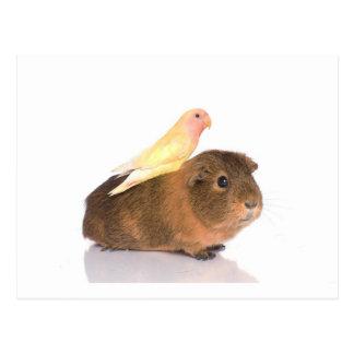 conejillo de Indias y pájaro amarillo Postal