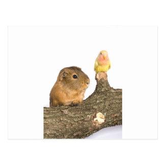 conejillo de Indias y pájaro amarillo Tarjeta Postal