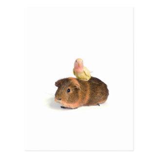 conejillo de Indias y pájaro amarillo Tarjetas Postales