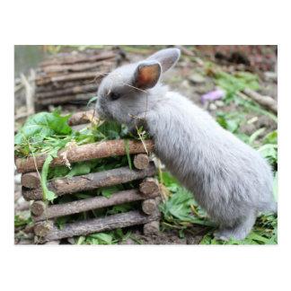 conejillo gris devora tarjeta postal