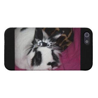 Conejito con la caja de la mota de IPhone del arco iPhone 5 Cárcasa