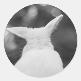 conejito curioso pegatina redonda