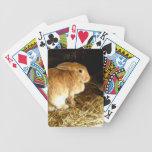 Conejito de Brown Baraja Cartas De Poker