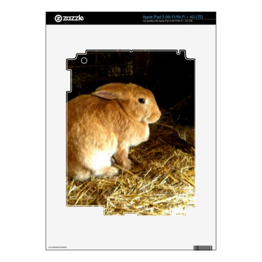 Conejito de Brown iPad 3 Skins