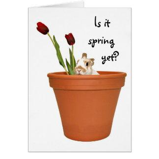 Conejito de la primavera tarjeta de felicitación