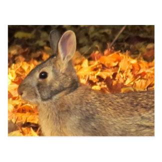 Conejito del otoño postales