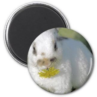 Conejito lindo que come la flor amarilla del imán redondo 5 cm