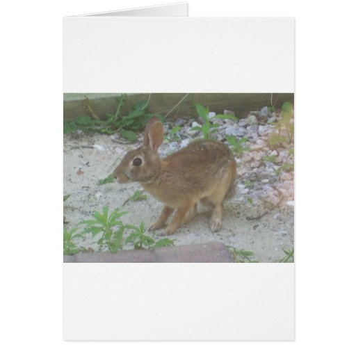 Conejito lindo tarjetas
