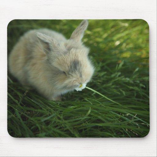 Conejito manchado que come la flor tapete de ratón