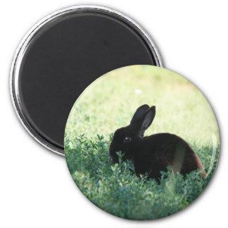 Conejito negro de Lil Imán Redondo 5 Cm