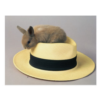 Conejito precioso en un gorra 71 postal