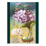 Conejito y violetas de pascua postal