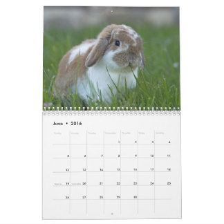 Conejitos 2016 - 12 meses de conejos de conejito calendario