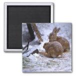 Conejitos de la nieve iman de nevera
