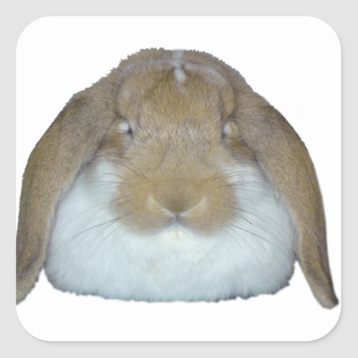 Conejitos de Ollie - adorable lindo del conejito Pegatina Cuadrada