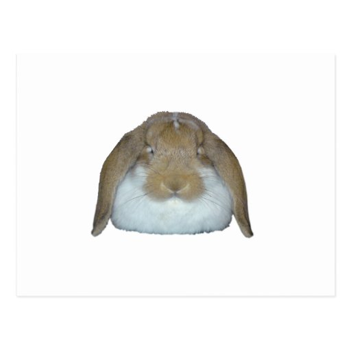 Conejitos de Ollie - adorable lindo del conejito Postales