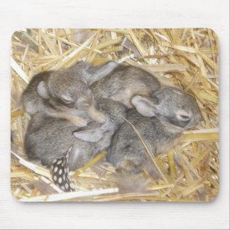 Conejitos del conejo de rabo blanco mousepad