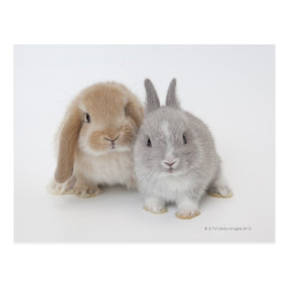 Conejitos del enano y de Holanda Lop de dos Postales