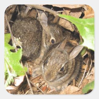 Conejitos salvajes del bebé pegatina cuadrada