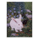Conejo blanco, conejo blanco, Darlene P. Coltra… Posters