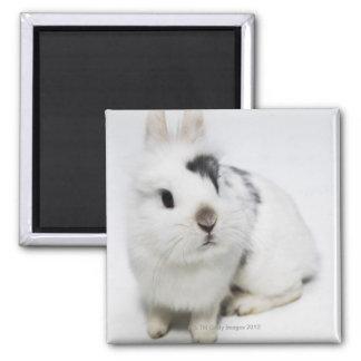 Conejo blanco, negro y marrón iman de frigorífico