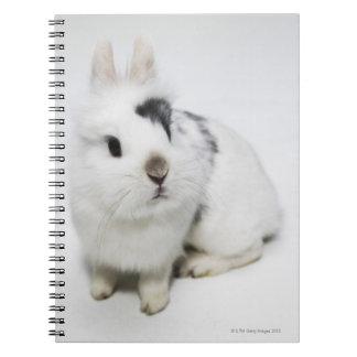 Conejo blanco, negro y marrón libretas espirales