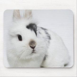 Conejo blanco, negro y marrón alfombrillas de ratones