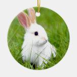 Conejo blanco ornamente de reyes