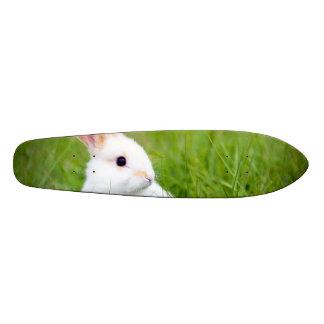 Conejo blanco skateboard