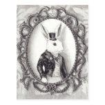 Conejo blanco - postal