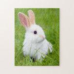 Conejo blanco rompecabeza con fotos