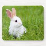 Conejo blanco tapete de raton