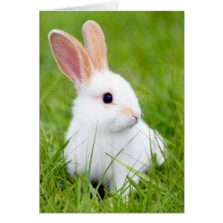 Conejo blanco tarjeta pequeña