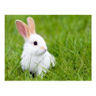 Conejo blanco tarjeta postal