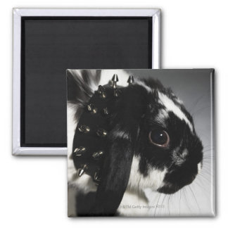 Conejo blanco y negro con el cuello tachonado imanes