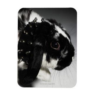 Conejo blanco y negro con el cuello tachonado imán rectangular