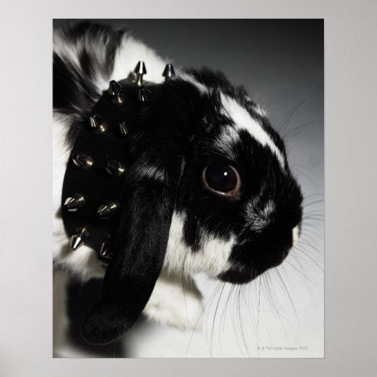 Conejo blanco y negro con el cuello tachonado póster