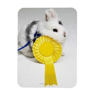 Conejo blanco y negro en el correo azul con amaril imanes
