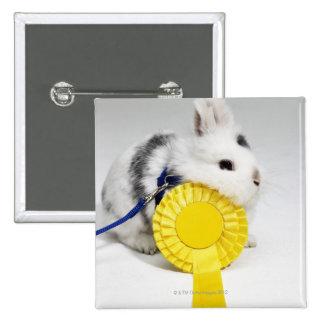 Conejo blanco y negro en el correo azul con amaril pins