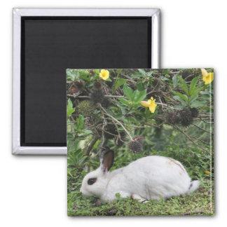 Conejo blanco y negro imán de frigorifico