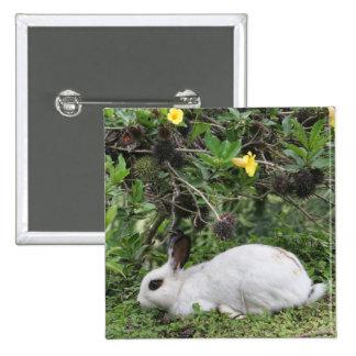 Conejo blanco y negro pin