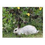 Conejo blanco y negro postal