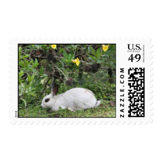 Conejo blanco y negro envio