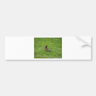 Conejo Pegatina De Parachoque