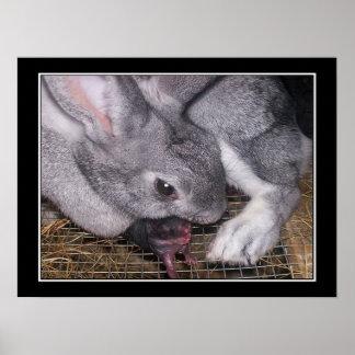 Conejo con el bebé recién nacido póster